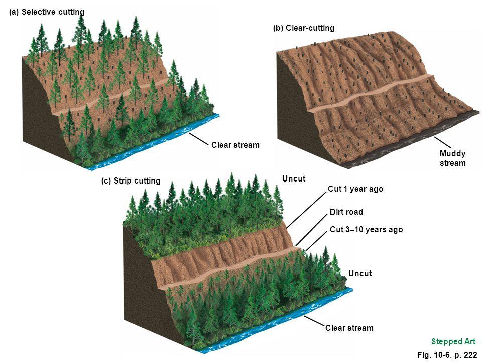 Stepped Art (b) Clear-cutting Muddy stream Uncut Cut 1 year ago Dirt road Cut 3–10 years ago Uncut Clear stream (a) Selective cutting (c) Strip cuttin