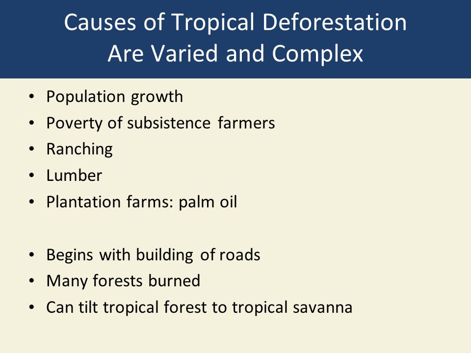 Causes of Tropical Deforestation Are Varied and Complex Population growth Poverty of subsistence farmers Ranching Lumber Plantation farms: palm oil Be