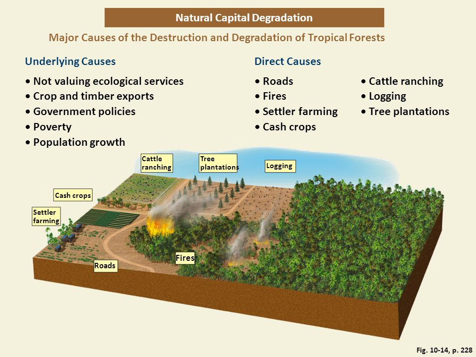 Natural Capital Degradation Major Causes of the Destruction and Degradation of Tropical Forests Underlying CausesDirect Causes Not valuing ecological