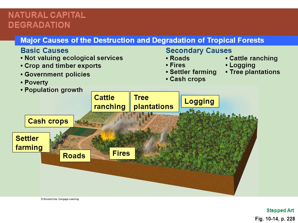 Cattle ranching Tree plantations Logging Cash crops Settler farming Fires Roads Secondary Causes Roads Cattle ranching Fires Logging Settler farming T