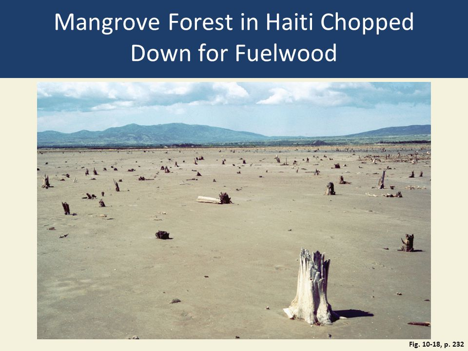 Mangrove Forest in Haiti Chopped Down for Fuelwood Fig. 10-18, p. 232