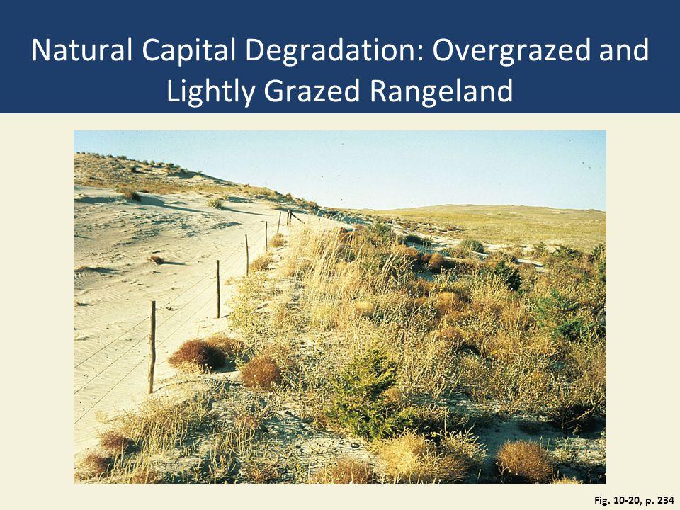Natural Capital Degradation: Overgrazed and Lightly Grazed Rangeland Fig. 10-20, p. 234