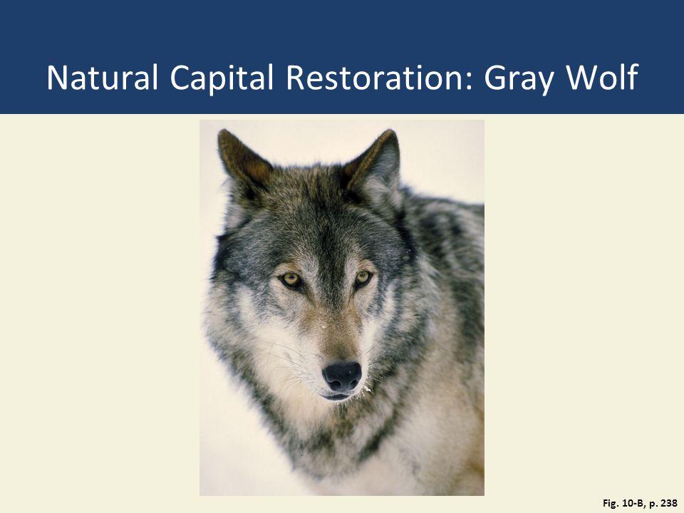 Natural Capital Restoration: Gray Wolf Fig. 10-B, p. 238