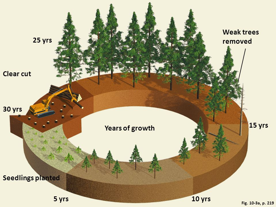 Fig. 10-3a, p. 219 25 yrs Weak trees removed Clear cut 30 yrs Years of growth 15 yrs Seedlings planted 5 yrs10 yrs