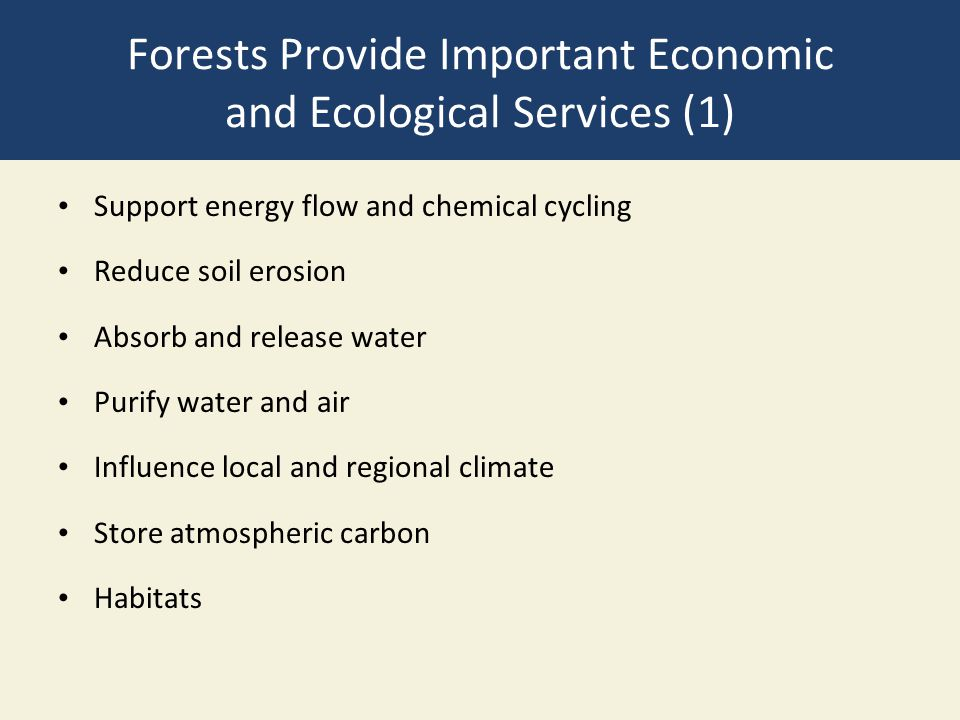 Forests Provide Important Economic and Ecological Services (1) Support energy flow and chemical cycling Reduce soil erosion Absorb and release water P