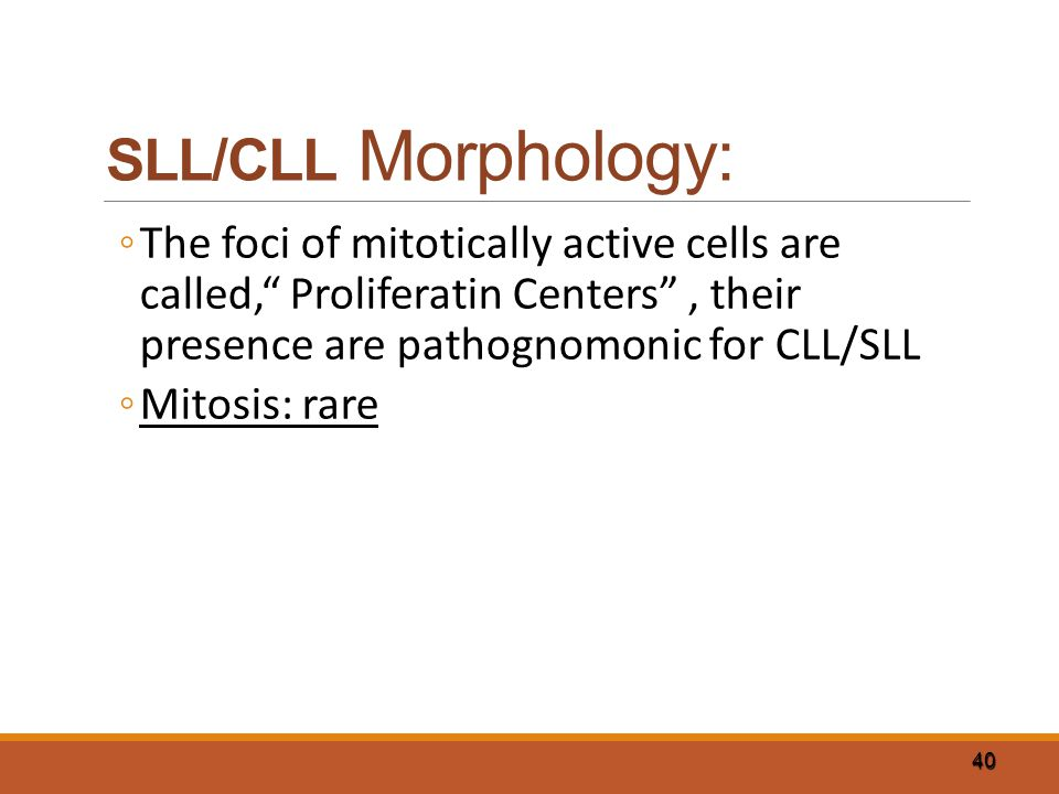 "40 SLL/CLL Morphology: ◦The foci of mitotically active cells are called,"" Proliferatin Centers"", their presence are pathognomonic for CLL/SLL ◦Mitosis"