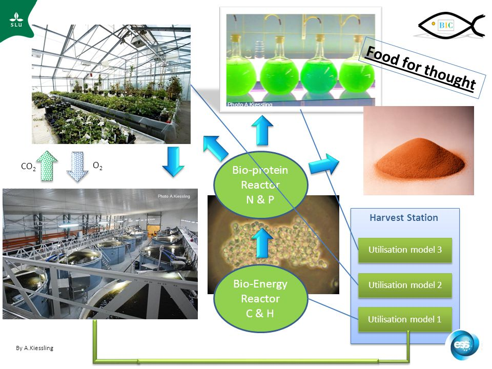 Ozon UV Utilisation model 3 Harvest Station Bio-Energy Reactor C & H Bio-protein Reactor N & P CO 2 O2O2 Photo A.Kiessling Utilisation model 2 Utilisation model 1 By A.Kiessling Food for thought