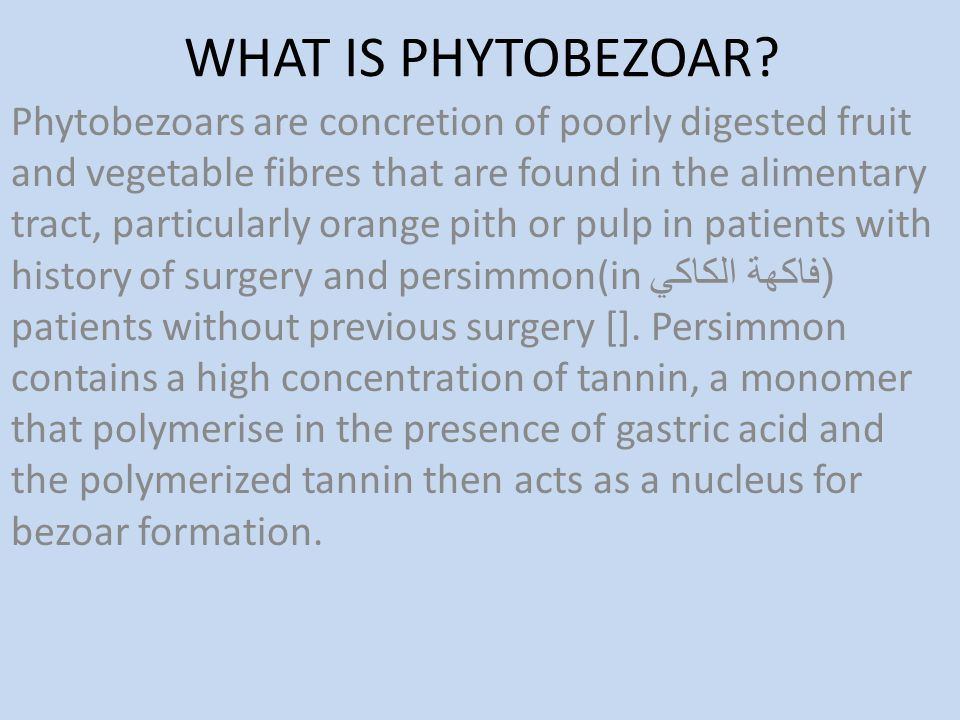 WHAT IS PHYTOBEZOAR? Phytobezoars are concretion of poorly digested fruit and vegetable fibres that are found in the alimentary tract, particularly or