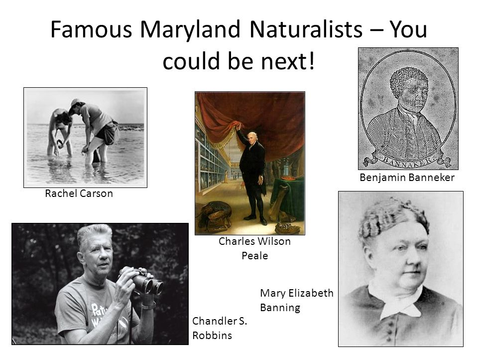 Famous Maryland Naturalists – You could be next! Rachel Carson Benjamin Banneker Chandler S. Robbins Mary Elizabeth Banning Charles Wilson Peale