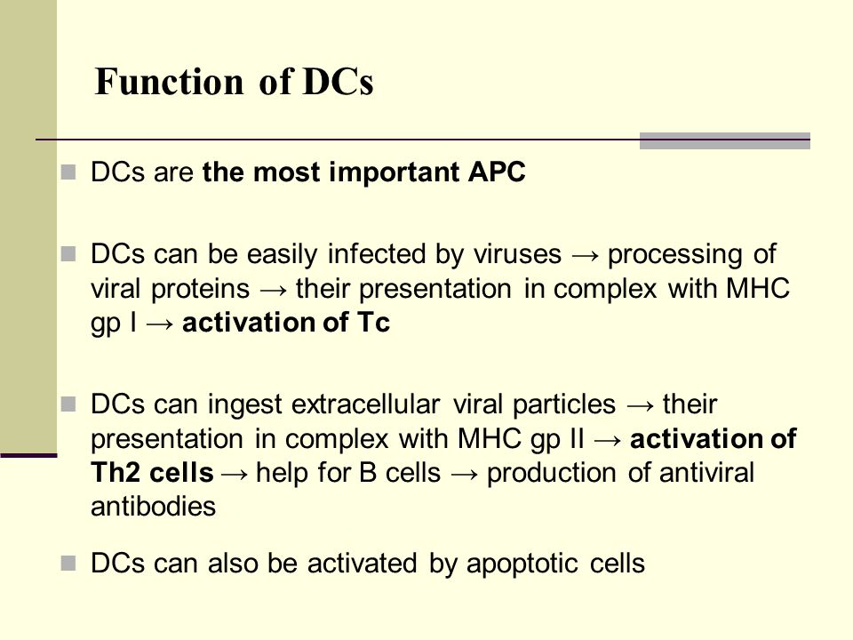 Function of DCs DCs are the most important APC DCs can be easily infected by viruses → processing of viral proteins → their presentation in complex wi