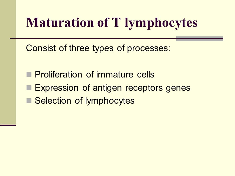 Maturation of T lymphocytes Consist of three types of processes: Proliferation of immature cells Expression of antigen receptors genes Selection of ly