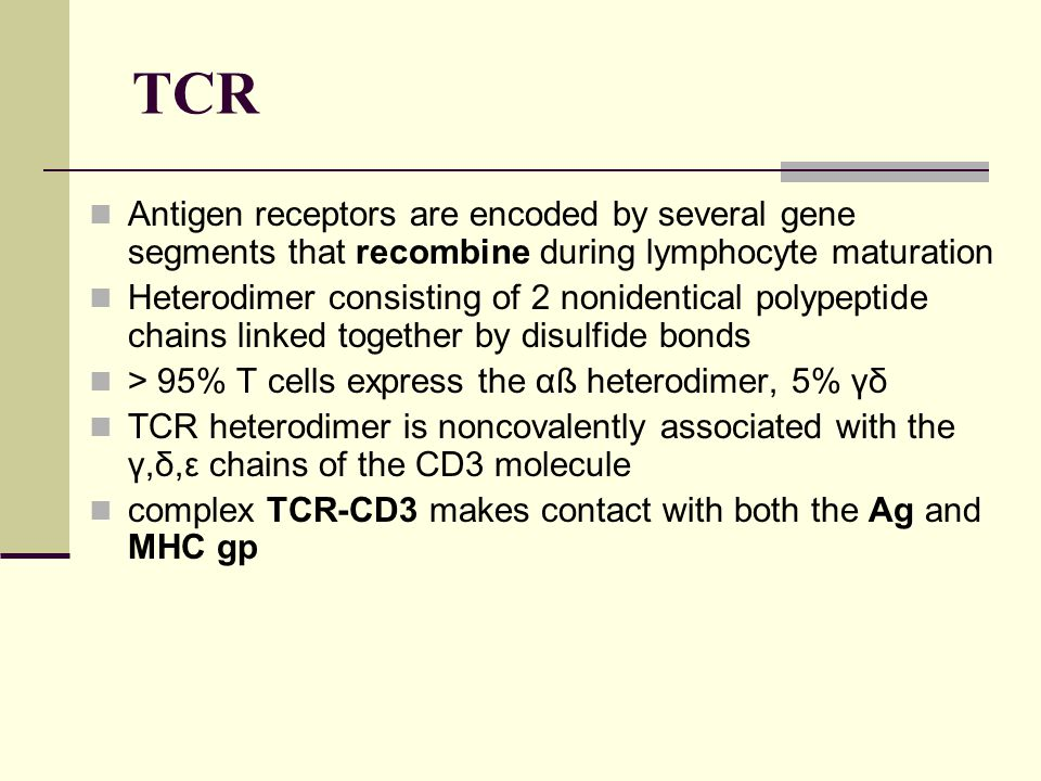 TCR Antigen receptors are encoded by several gene segments that recombine during lymphocyte maturation Heterodimer consisting of 2 nonidentical polype