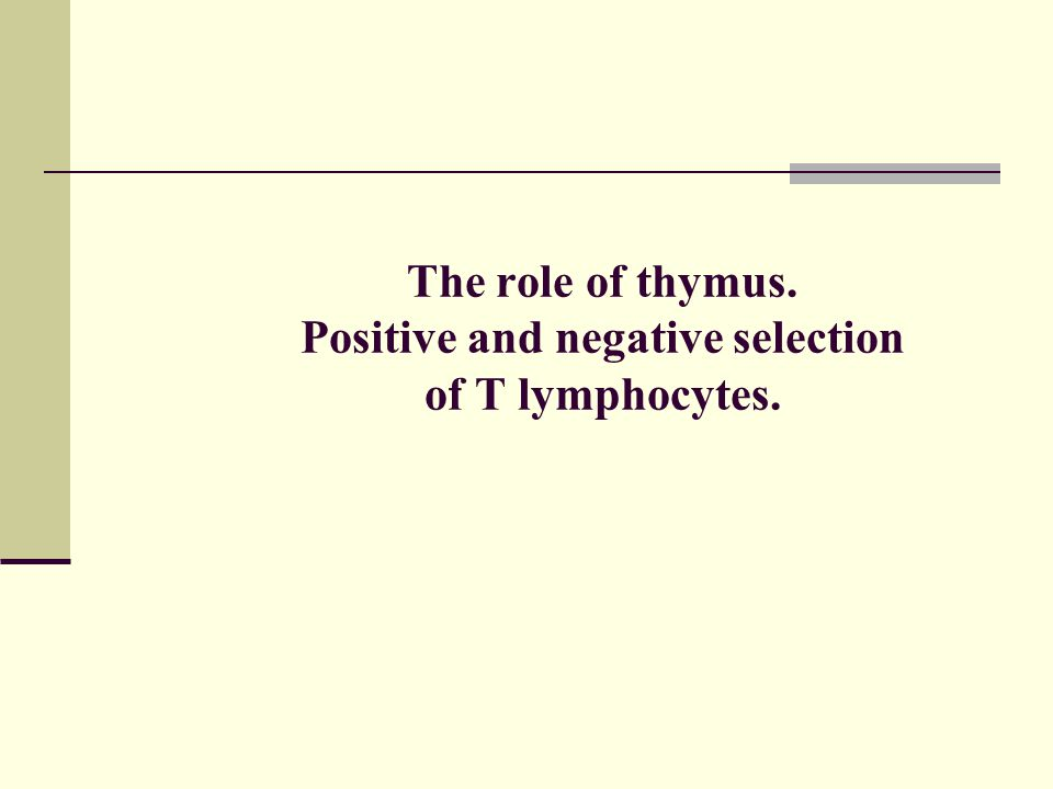 The role of thymus. Positive and negative selection of T lymphocytes.