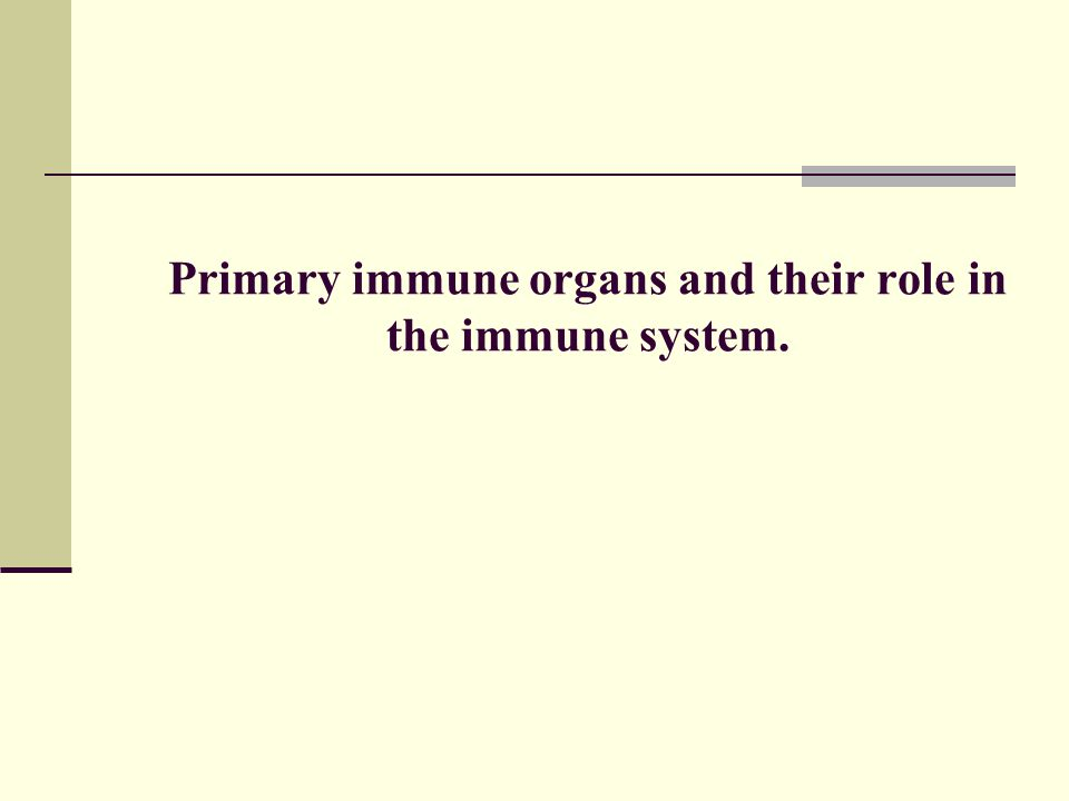 Primary immune organs and their role in the immune system.