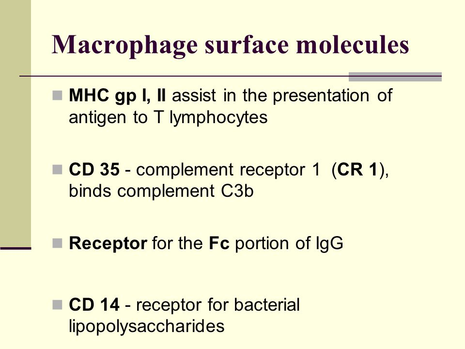Cytokines produced by macrophages IL- 1 α, ß - stimulate both T and B cells, Ig synthesis, activation of other macrophages, sensitizing cells to IL-2 and IFN TNF- α - similar in function to IL-1 IL- 8 - secreted by activated macrophages - chemokine attracting neutrophils and T cells IL-12 - promotes induction of Th1 cells, inhibits Th2 cells IFN- α- activates host cells to induce enzymes inhibiting viral replication; increases expression of MHC gp I on host cells; activates NK cells, T cells, other macrophages