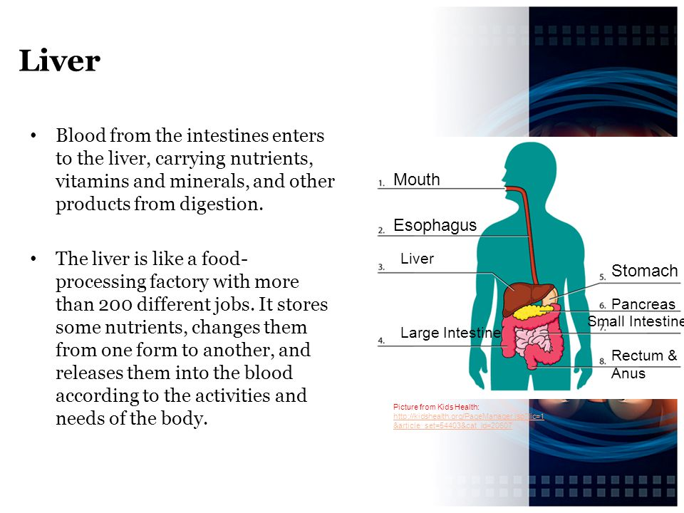Liver Blood from the intestines enters to the liver, carrying nutrients, vitamins and minerals, and other products from digestion.