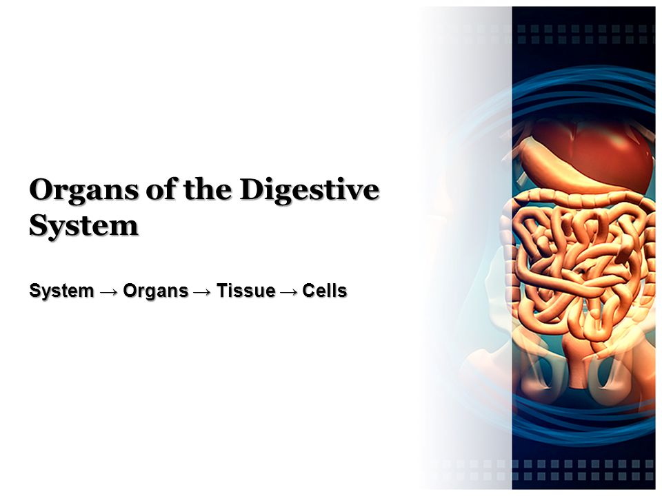 Organs of the Digestive System System → Organs → Tissue → Cells