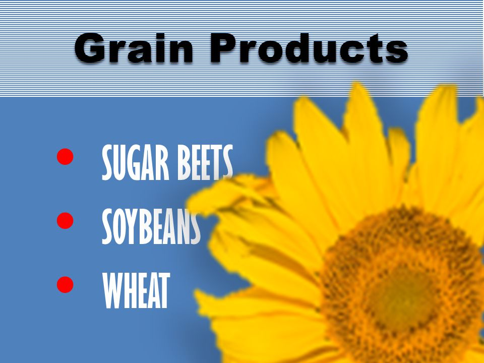 SUGAR BEETS SOYBEANS WHEAT Grain Products