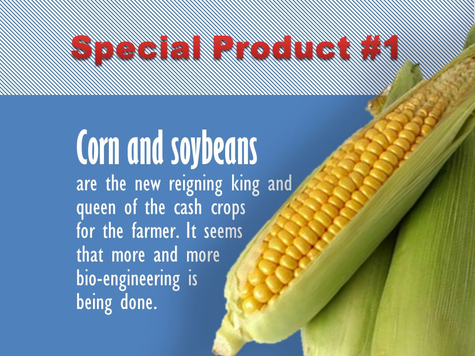Corn and soybeans are the new reigning king and queen of the cash crops for the farmer.