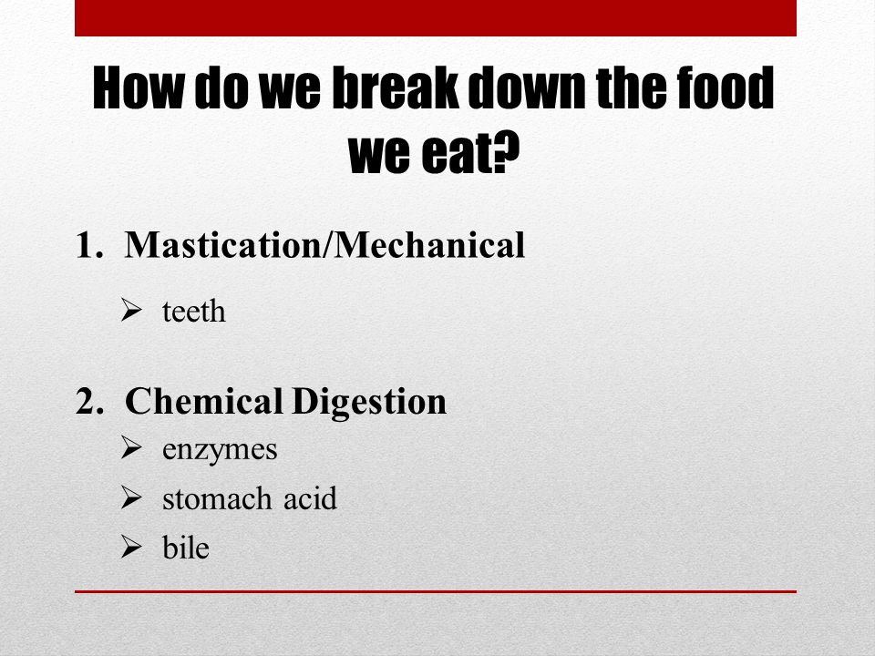How do we break down the food we eat. 1. Mastication/Mechanical 2.