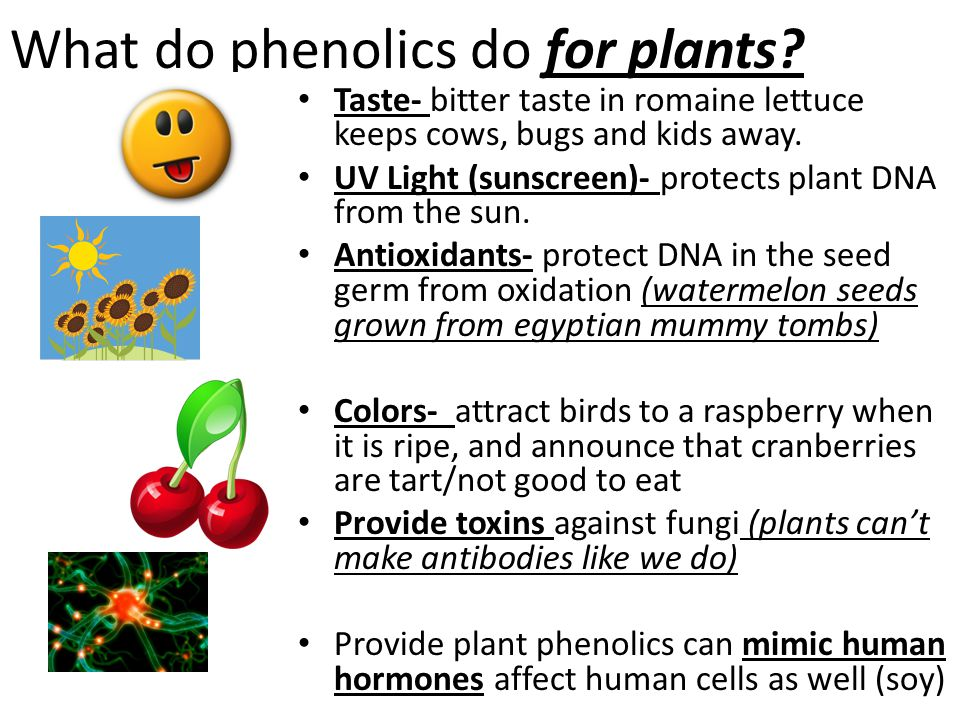 What do phenolics do for plants.