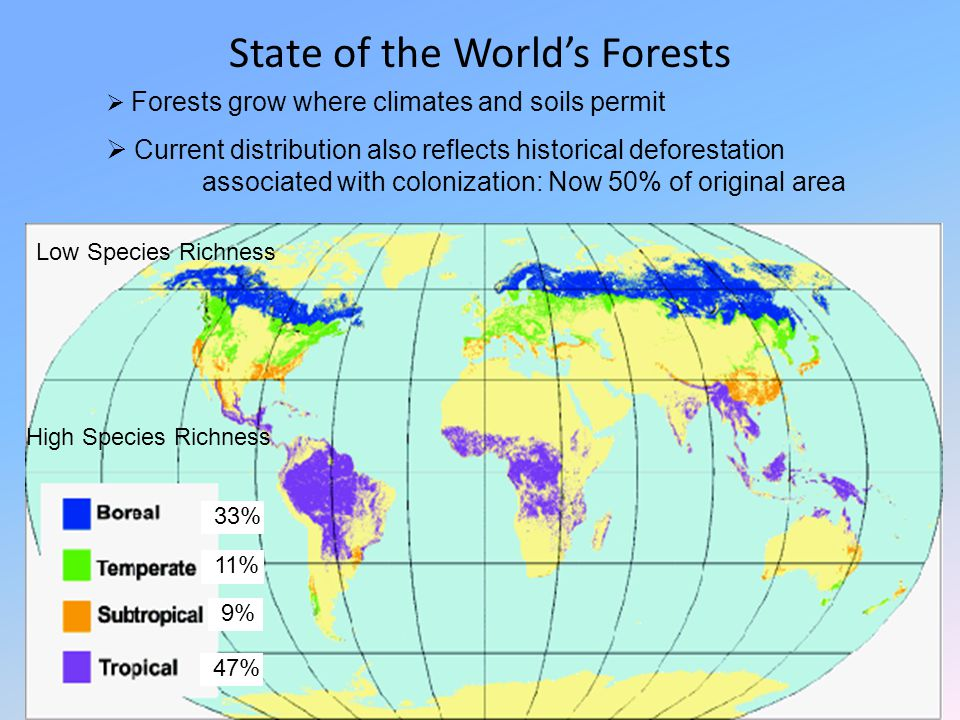 State of the World's Forests  Forests grow where climates and soils permit  Current distribution also reflects historical deforestation associated w