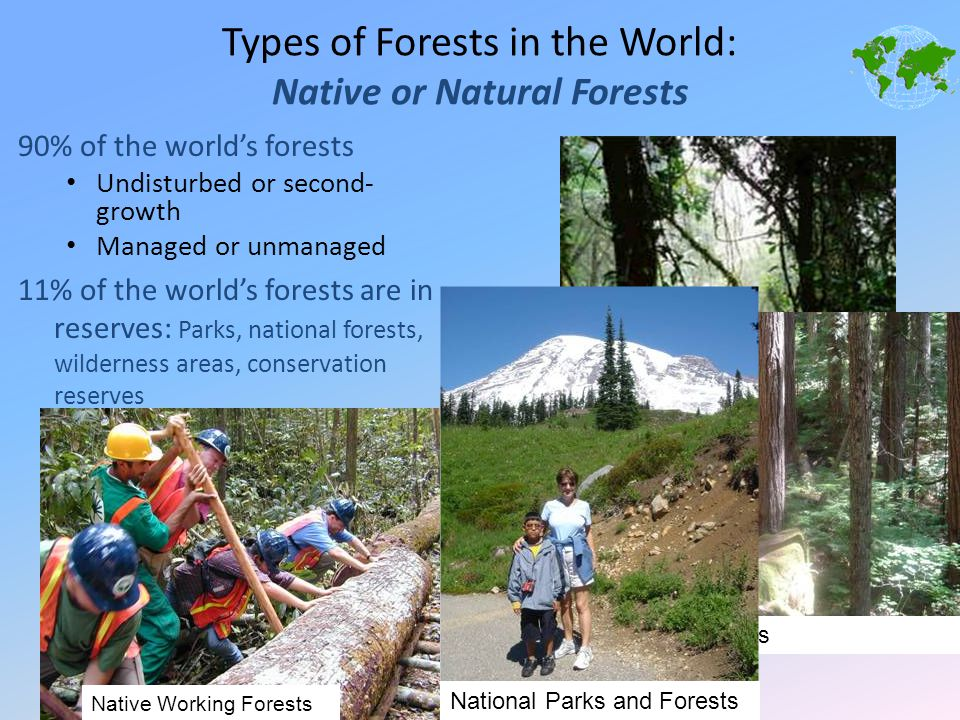 Types of Forests in the World: Native or Natural Forests 90% of the world's forests Undisturbed or second- growth Managed or unmanaged 11% of the worl