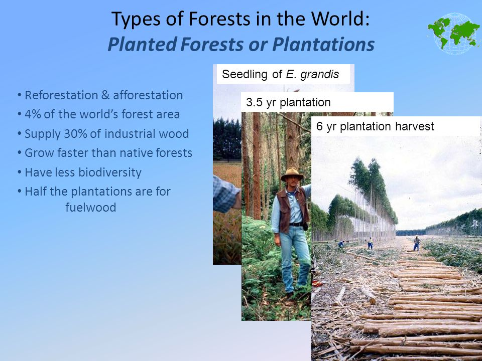 Types of Forests in the World: Planted Forests or Plantations Reforestation & afforestation 4% of the world's forest area Supply 30% of industrial woo