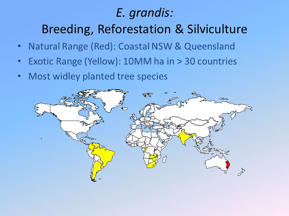 E. grandis: Breeding, Reforestation & Silviculture Natural Range (Red): Coastal NSW & Queensland Exotic Range (Yellow): 10MM ha in > 30 countries Most