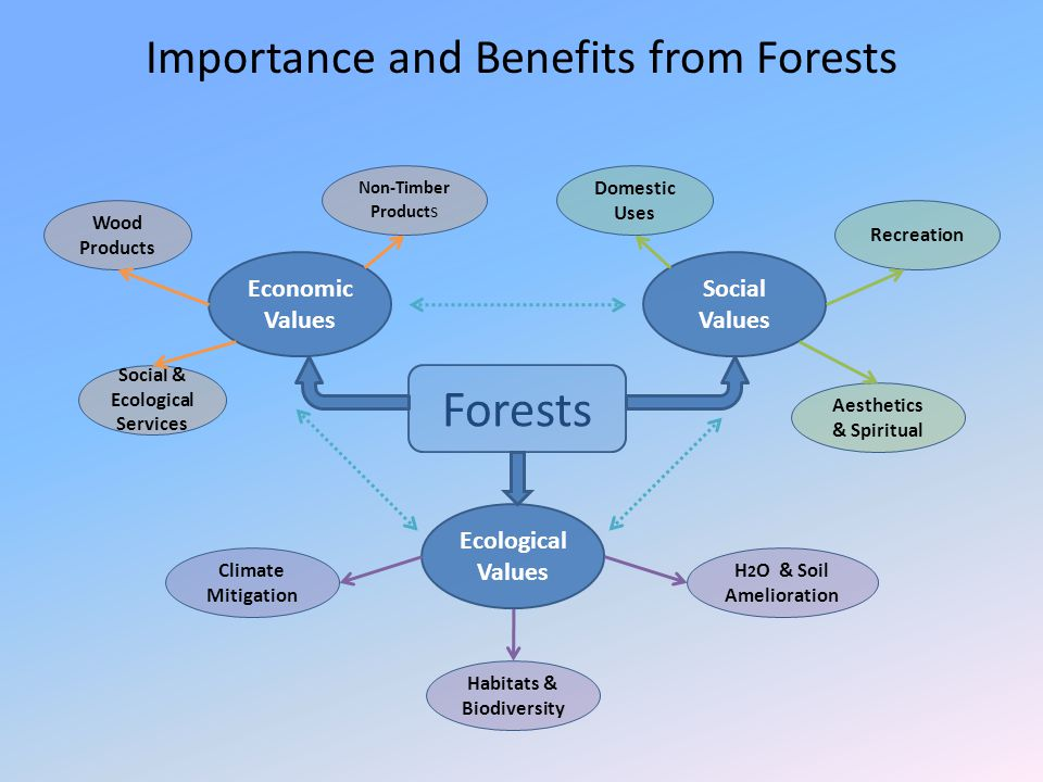 Importance and Benefits from Forests Forests Economic Values Social Values Ecological Values Wood Products Non-Timber Product s Social & Ecological Se