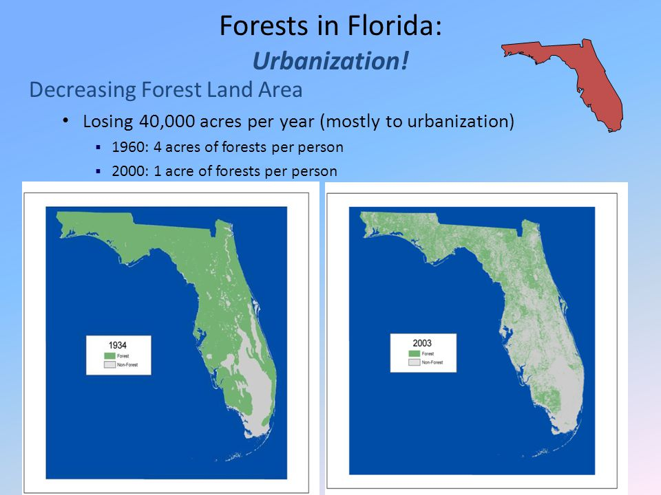 Forests in Florida: Urbanization! Decreasing Forest Land Area Losing 40,000 acres per year (mostly to urbanization)  1960: 4 acres of forests per per