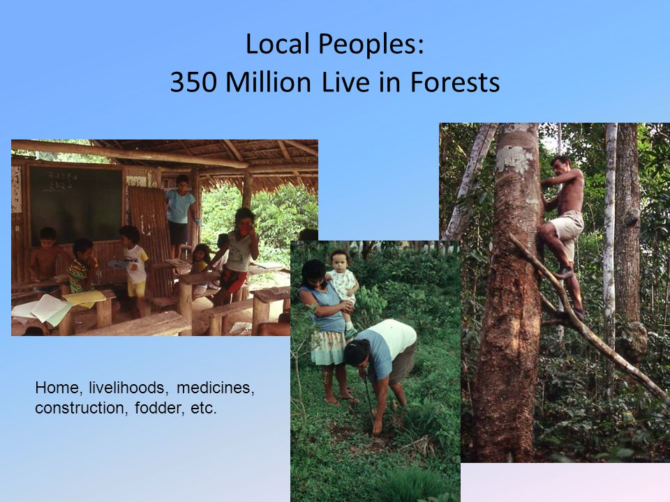 Local Peoples: 350 Million Live in Forests Home, livelihoods, medicines, construction, fodder, etc.