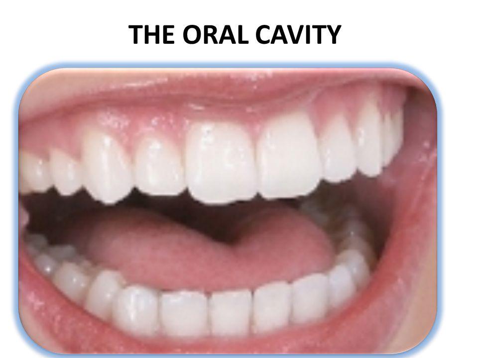Periodontitis Gingivitis usually precedes periodontitis and, unlike gingivitis, periodontitis is irreversible.