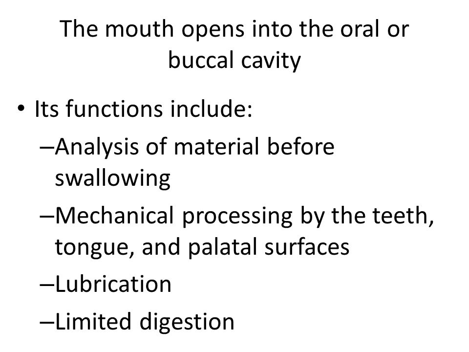 The mouth opens into the oral or buccal cavity Its functions include: – Analysis of material before swallowing – Mechanical processing by the teeth, tongue, and palatal surfaces – Lubrication – Limited digestion