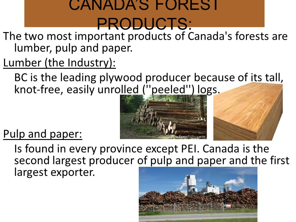 CANADA'S FOREST PRODUCTS: The two most important products of Canada s forests are lumber, pulp and paper.