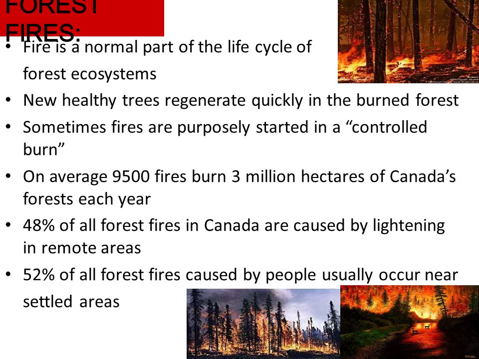 Fire is a normal part of the life cycle of forest ecosystems New healthy trees regenerate quickly in the burned forest Sometimes fires are purposely started in a controlled burn On average 9500 fires burn 3 million hectares of Canada's forests each year 48% of all forest fires in Canada are caused by lightening in remote areas 52% of all forest fires caused by people usually occur near settled areas