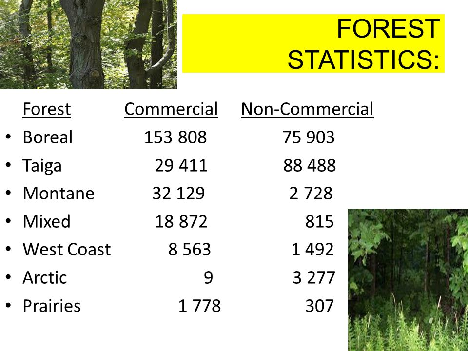 FOREST STATISTICS: Forest Commercial Non-Commercial Boreal 153 808 75 903 Taiga 29 411 88 488 Montane 32 129 2 728 Mixed 18 872 815 West Coast 8 563 1 492 Arctic 9 3 277 Prairies 1 778 307