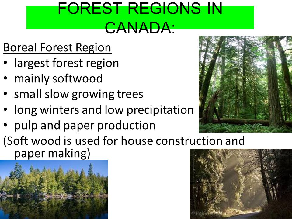 FOREST REGIONS IN CANADA: Boreal Forest Region largest forest region mainly softwood small slow growing trees long winters and low precipitation pulp and paper production (Soft wood is used for house construction and paper making)