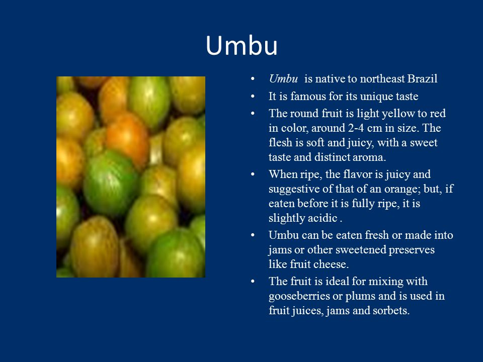 Umbu Umbu is native to northeast Brazil It is famous for its unique taste The round fruit is light yellow to red in color, around 2-4 cm in size.