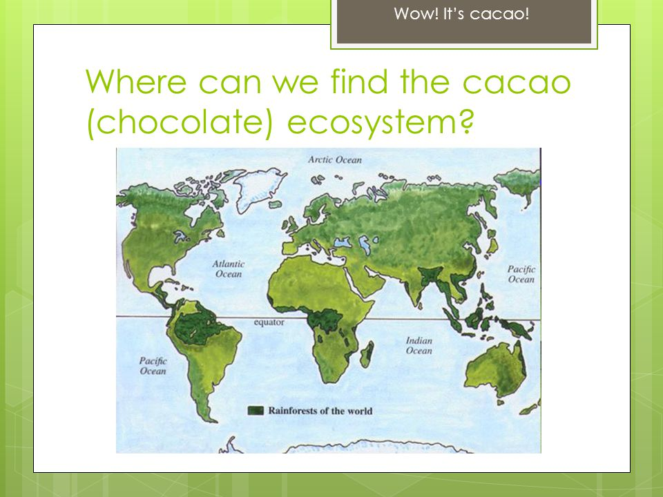 Where can we find the cacao (chocolate) ecosystem Wow! It's cacao!