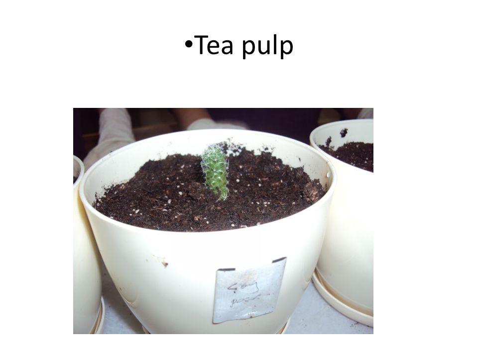 Tea pulp