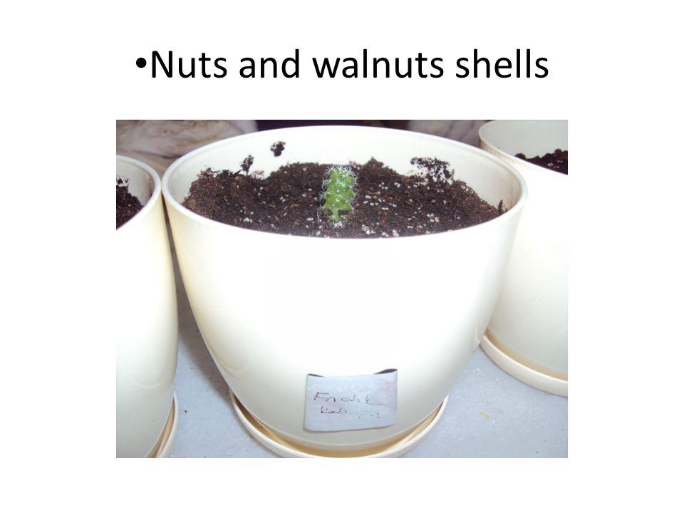 Nuts and walnuts shells