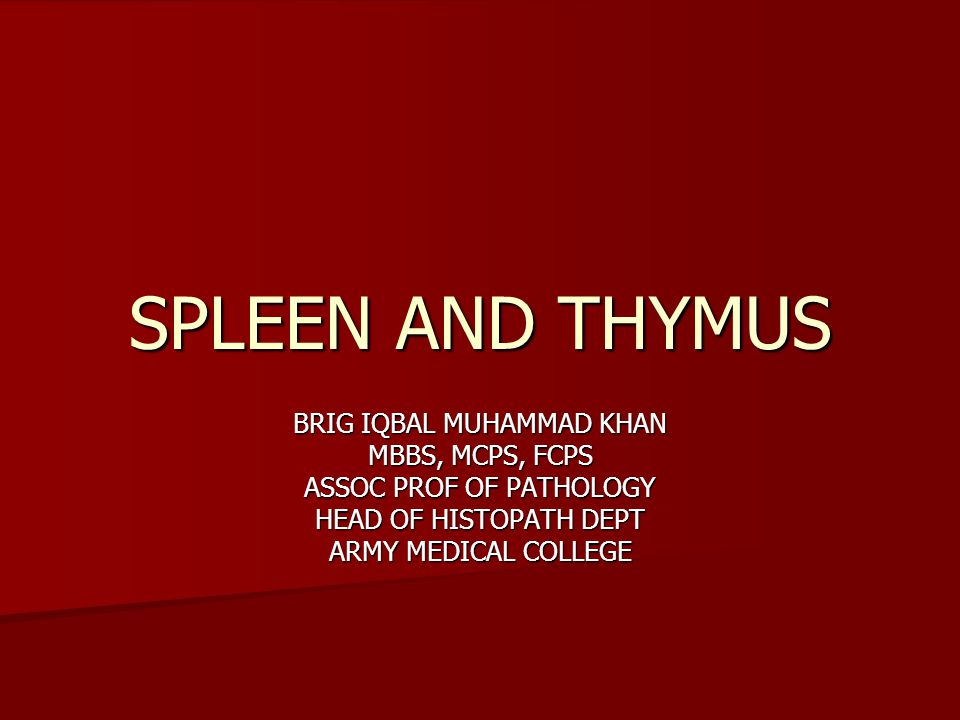 SPLEEN AND THYMUS BRIG IQBAL MUHAMMAD KHAN MBBS, MCPS, FCPS ASSOC PROF OF PATHOLOGY HEAD OF HISTOPATH DEPT ARMY MEDICAL COLLEGE