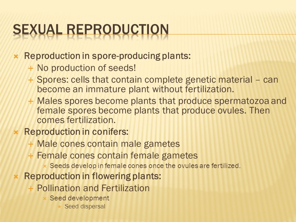  Reproduction in spore-producing plants:  No production of seeds!  Spores: cells that contain complete genetic material – can become an immature pl