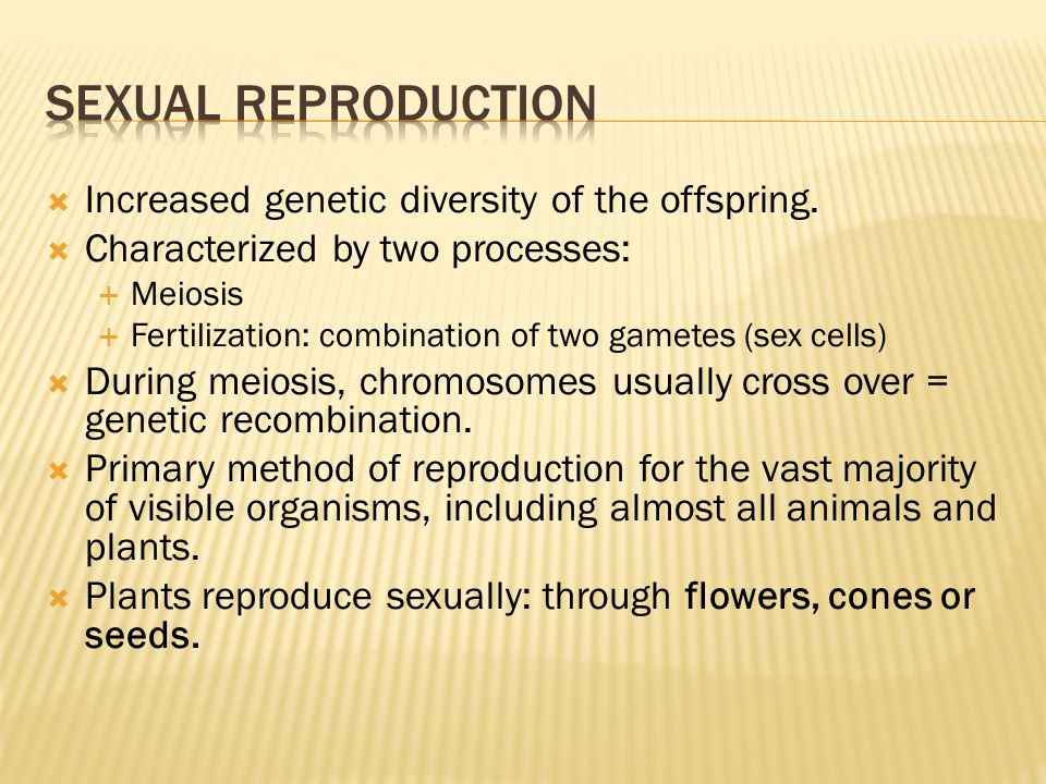  Increased genetic diversity of the offspring.