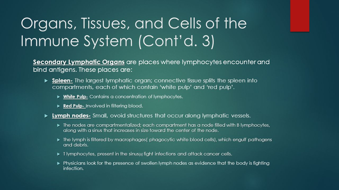 Organs, Tissues, and Cells of the Immune System (Cont'd.