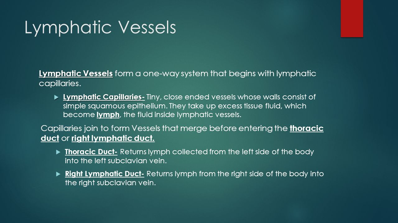 Lymphatic Vessels Lymphatic Vessels Lymphatic Vessels form a one-way system that begins with lymphatic capillaries.