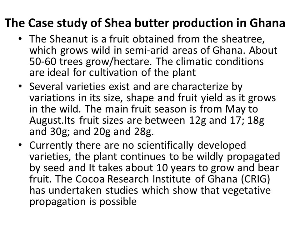 The Case study of Shea butter production in Ghana The Sheanut is a fruit obtained from the sheatree, which grows wild in semi-arid areas of Ghana.