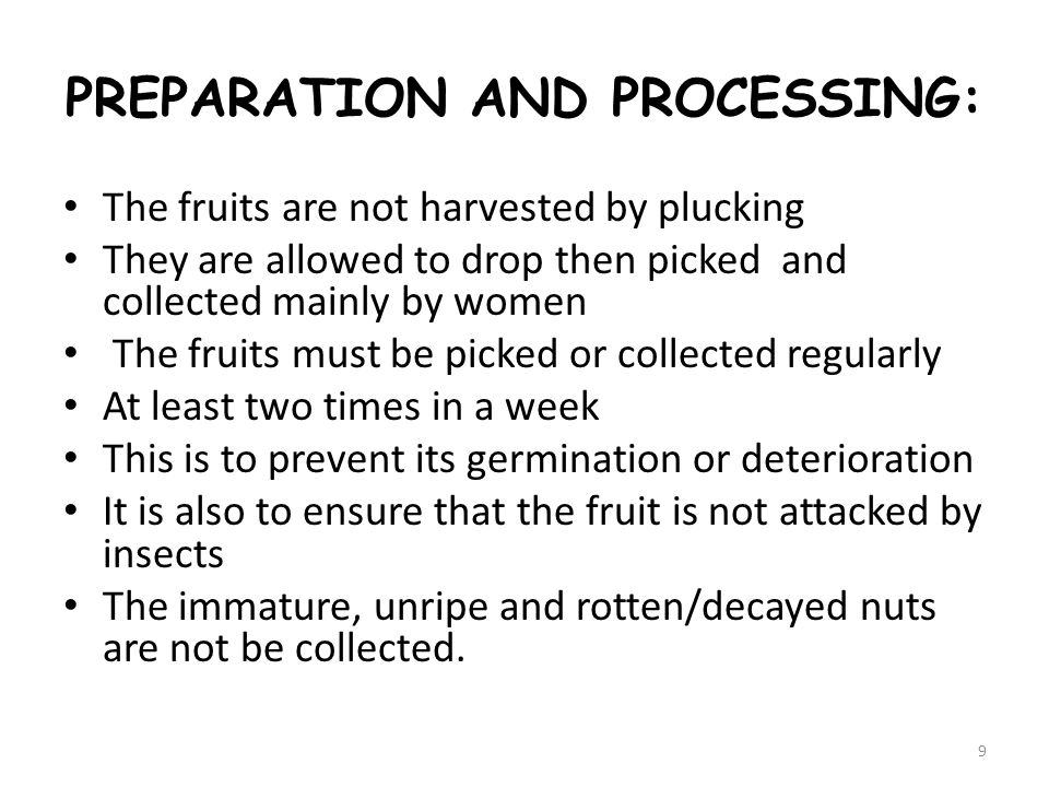 PREPARATION AND PROCESSING: The fruits are not harvested by plucking They are allowed to drop then picked and collected mainly by women The fruits must be picked or collected regularly At least two times in a week This is to prevent its germination or deterioration It is also to ensure that the fruit is not attacked by insects The immature, unripe and rotten/decayed nuts are not be collected.