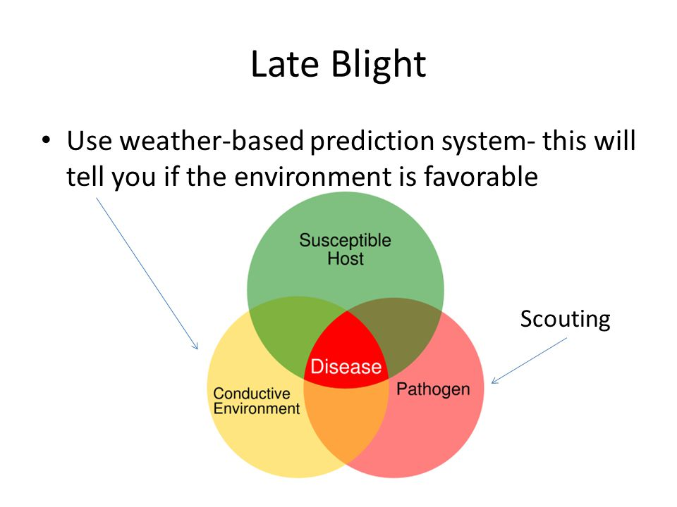 Late Blight Use weather-based prediction system- this will tell you if the environment is favorable Scouting